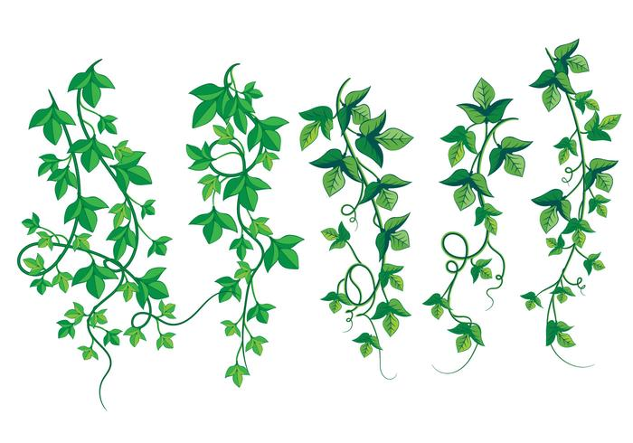 Illustration of Wild Growing Poison Ivy