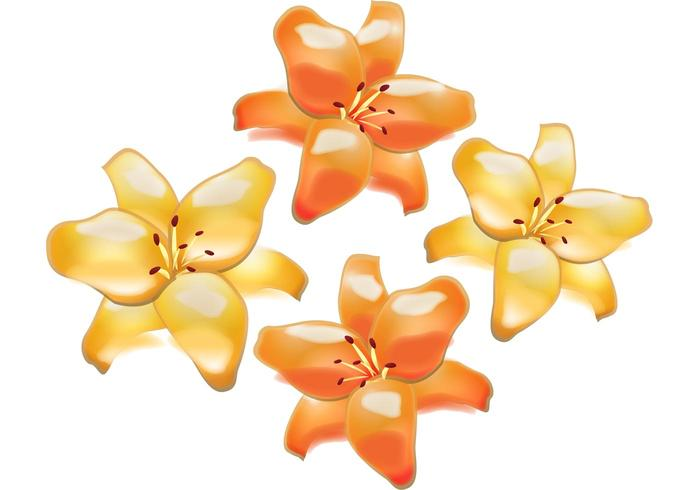 Flower Vector - Lily Flowers