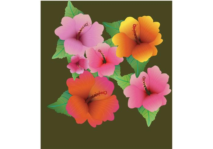 Flower Vector - Hibiscus Flowers