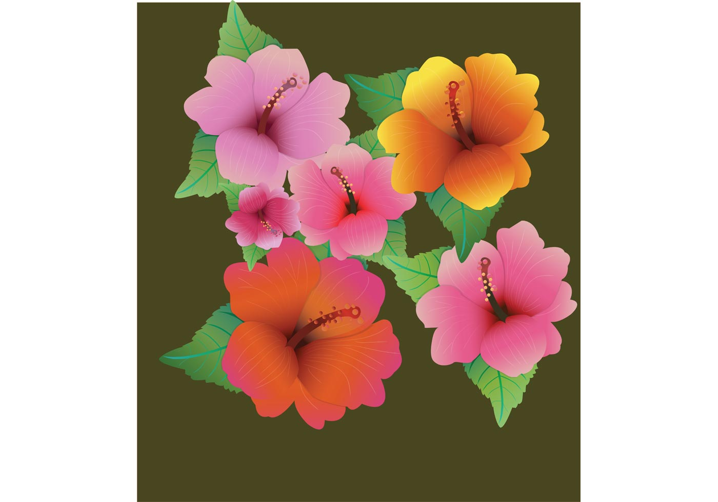 Flower vector free hibiscus flowers - Hibiscus images download ...