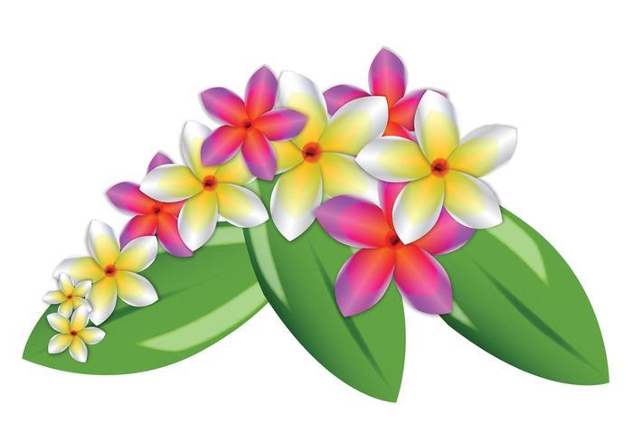 Flores del vector del Plumeria