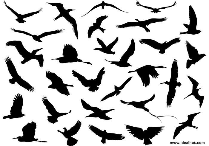 30 Different Flying Birds