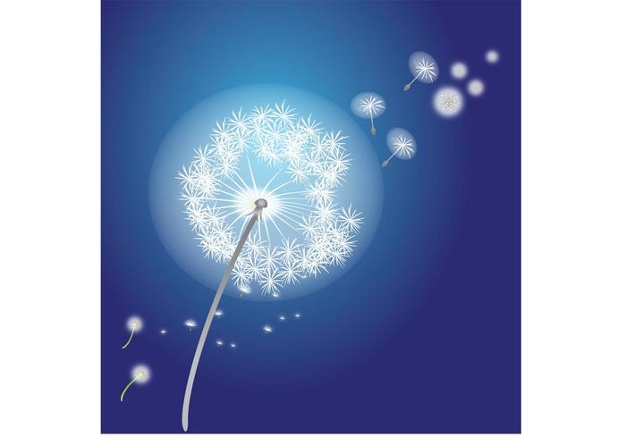 Vector Flower - Dandelions Vector Flowers