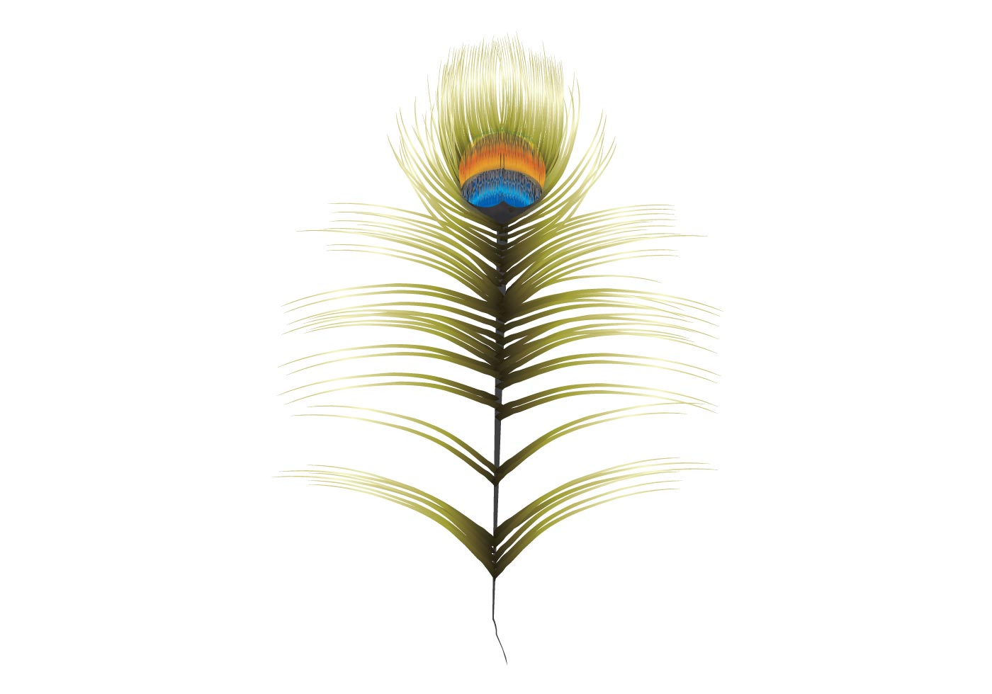 Peacock Feather - Download Free Vector Art, Stock Graphics ...