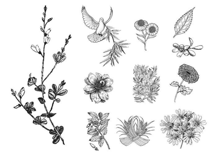 11 etsade blommiga vektorer