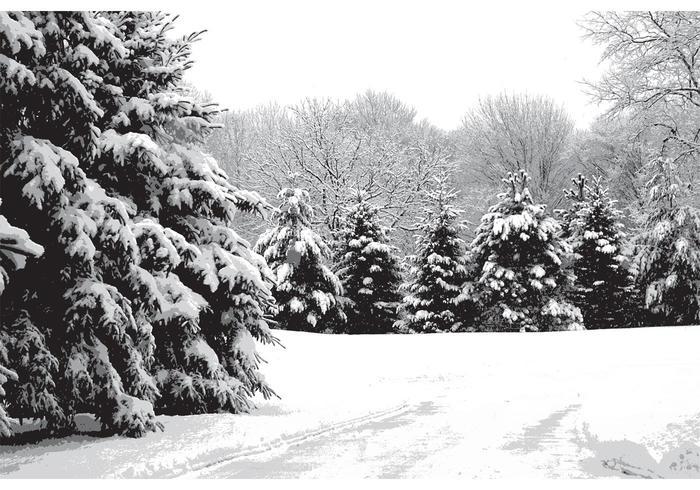 snow pines vector