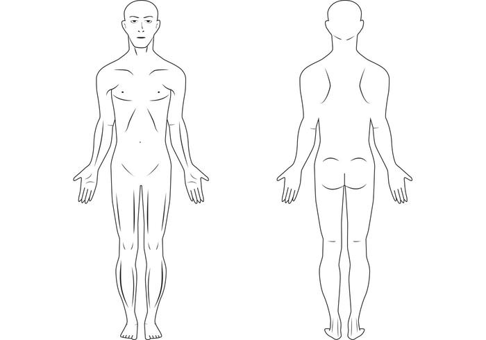 Free human body vector