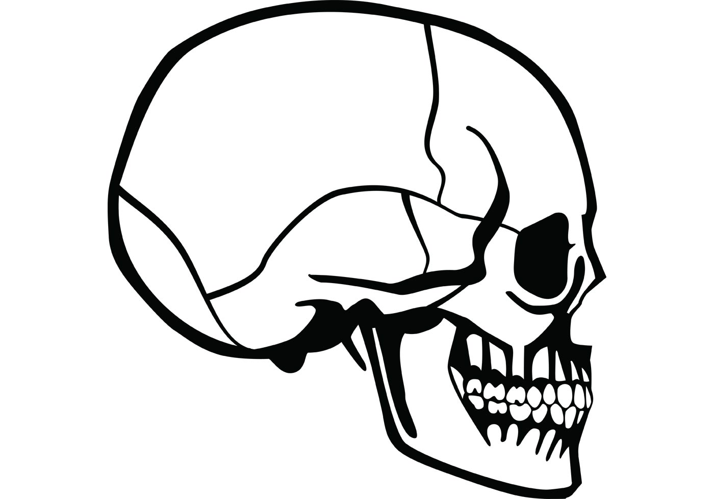 It's just an image of Invaluable Skull Profile Drawing