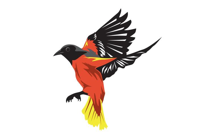 oriole bird download free vector art stock graphics images rh vecteezy com free bird vector silhouettes free hummingbird vector