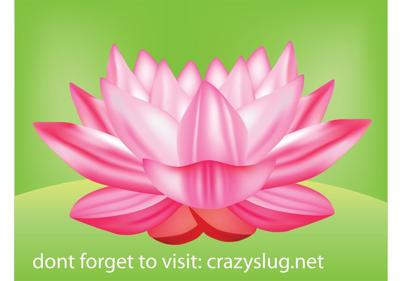 Flower Vector Free Lotus Flower From Vecteezy Com