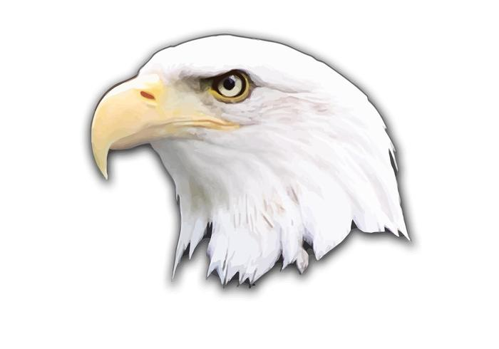 eagle vector rh vecteezy com bald eagle vector art free bald eagle head vector