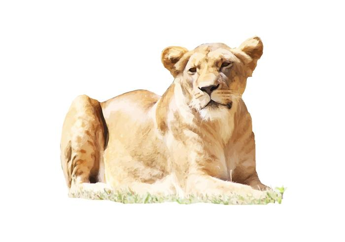 Female Lion Vector