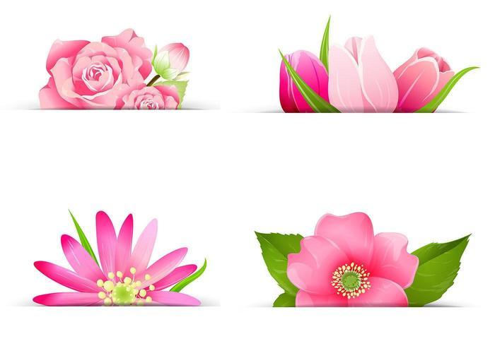 Conjunto de vectores de banner flor rosa