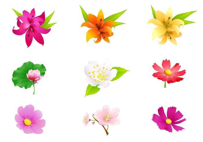 Pack de fleurs tropicales vecteur