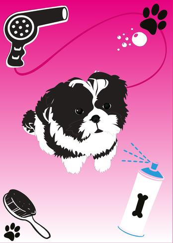Shih Tzu Puppy Vector