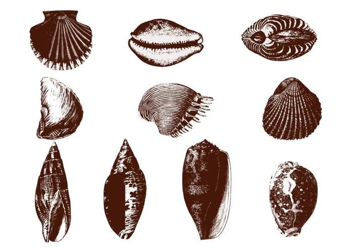 Etched Shell Vectors Pack