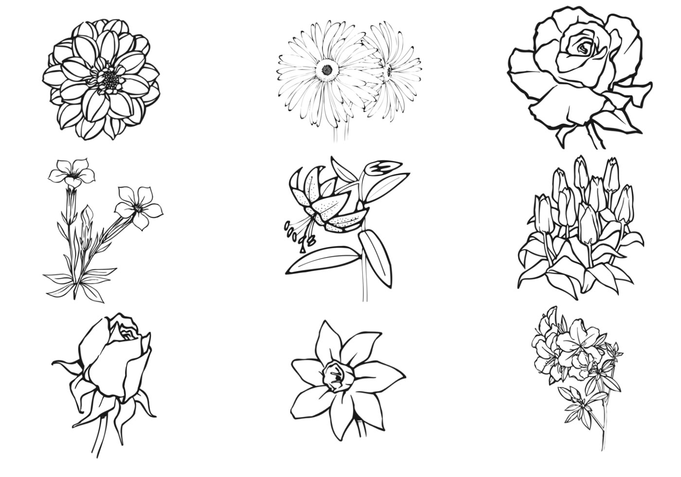 Hand Drawn Flower Vector Pack - Download Free Vector Art ...
