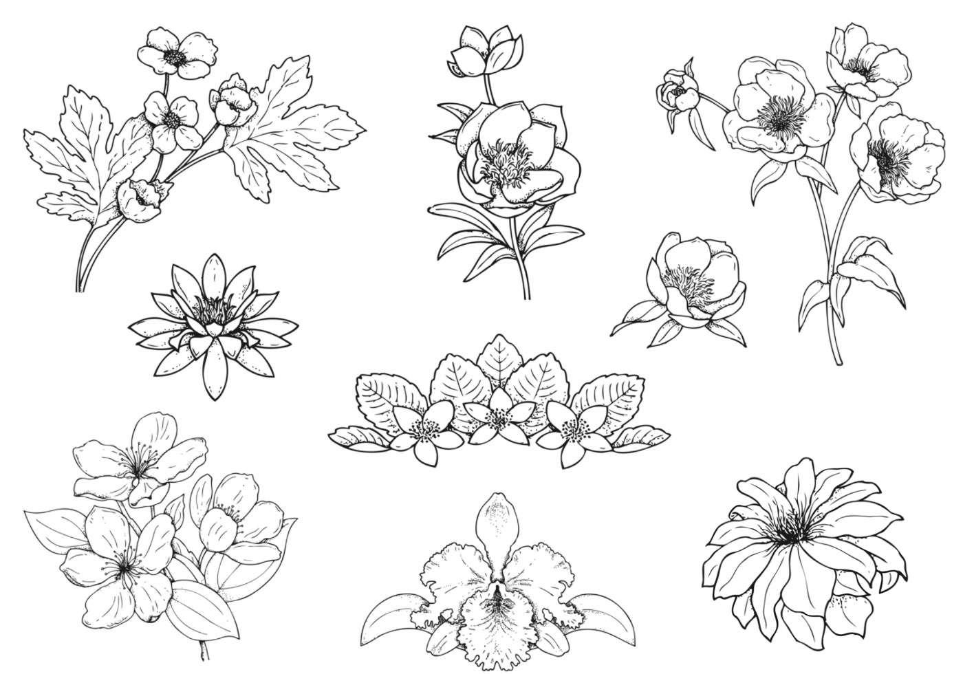 Hand Drawn Flower Vector Pack Download Free Vector Art Stock Graphics Amp Images