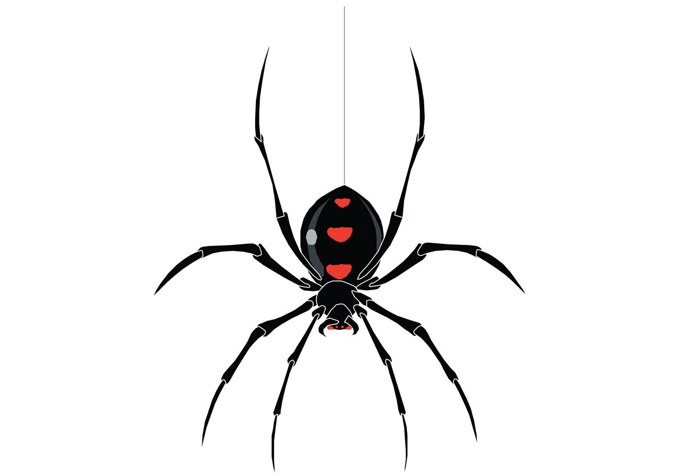 Spider Vector | Free Vector Art at Vecteezy!