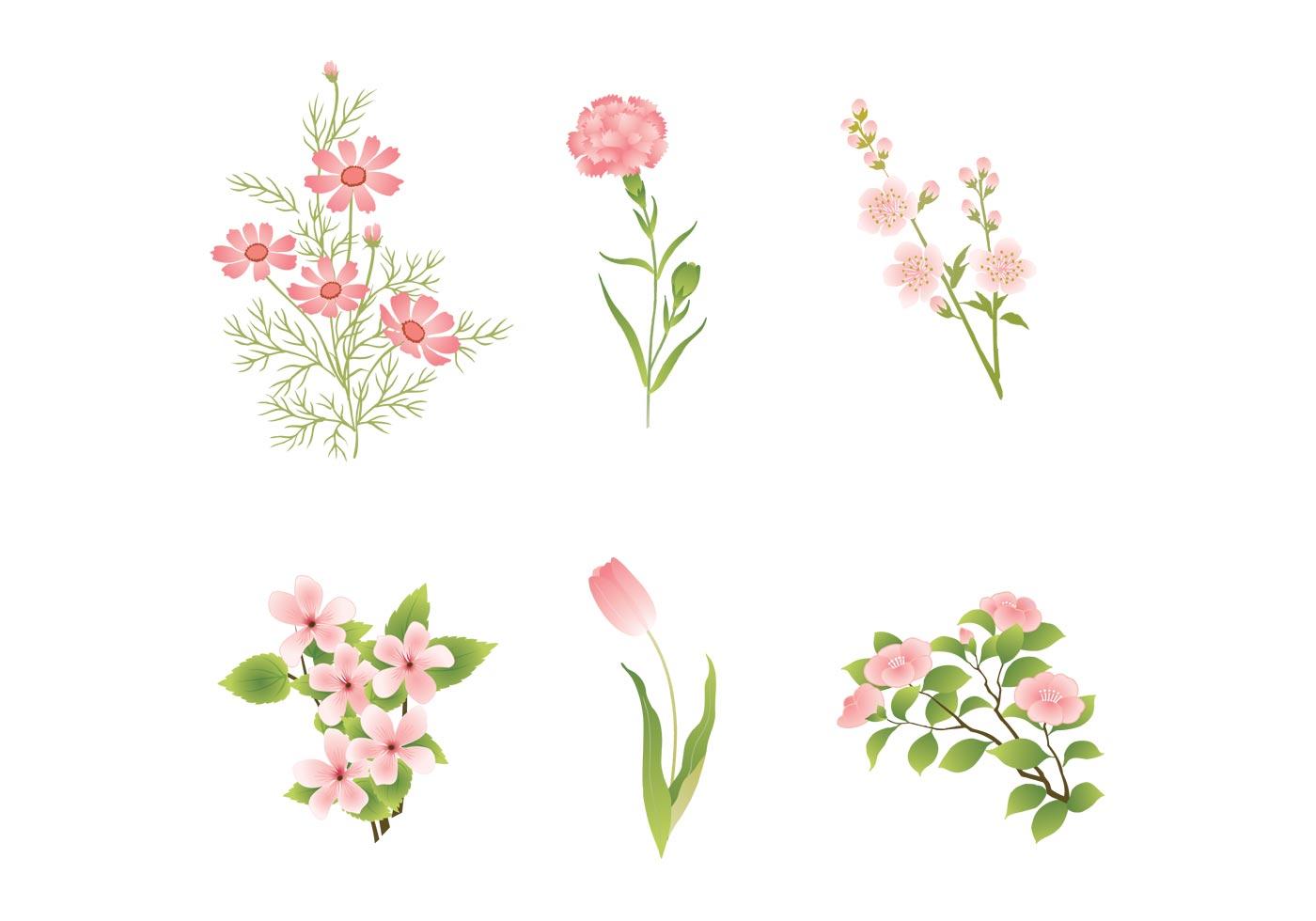 Various Pink Flower Vectors Download Free Vector Art