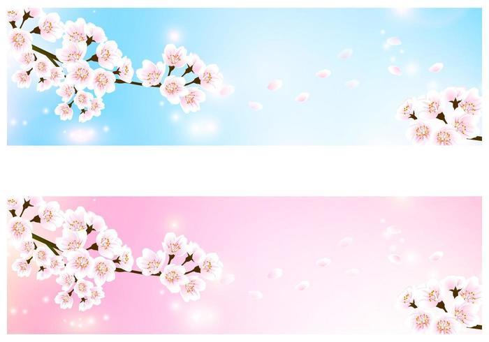 Cherry Blossom Banner Vector Pack