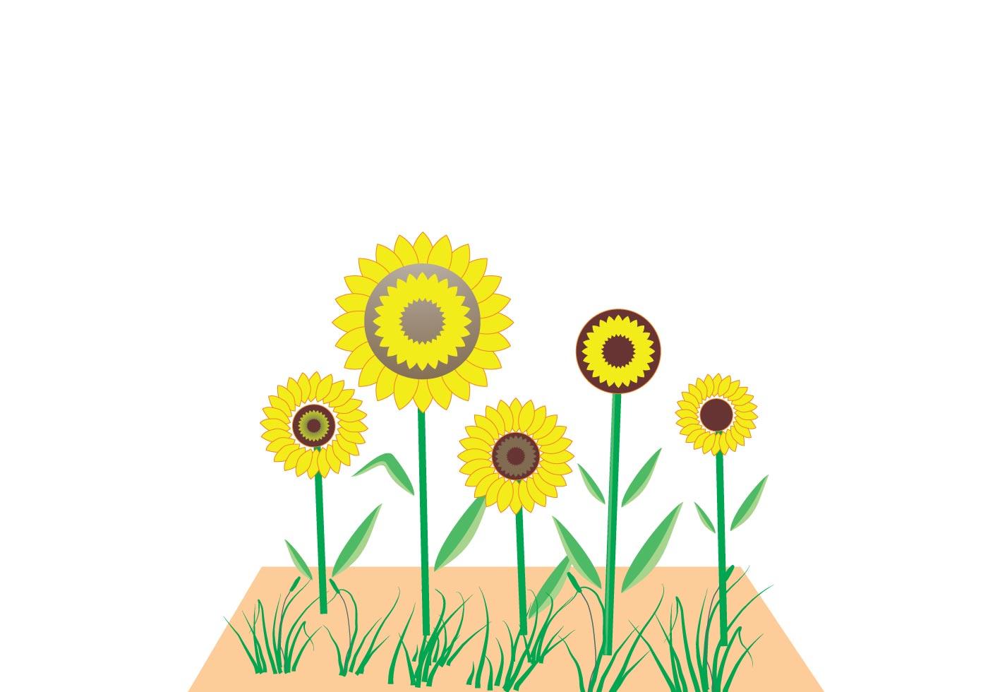 Sunflower Vector | Free Vector Art at Vecteezy!