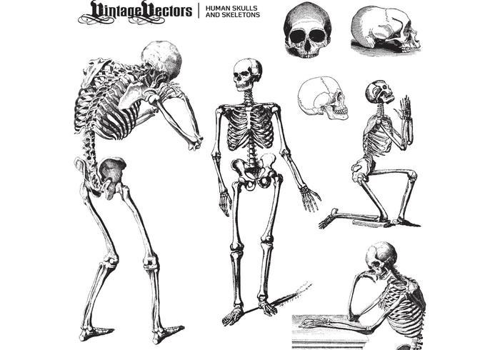 Menselijke Schedels en Skeletten