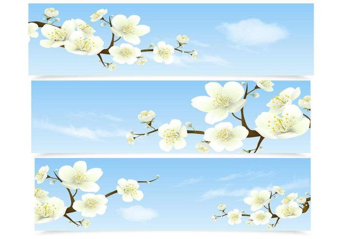 Cherry Blossom Banner Vector Set