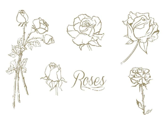 Hand Drawn Roses Vector Set Download Free Vector Art Stock