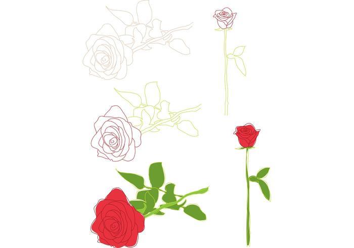 Ilustrações de rosas