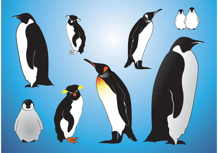 Pingviner vektorer