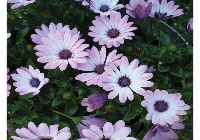 Spring Lila Flowers