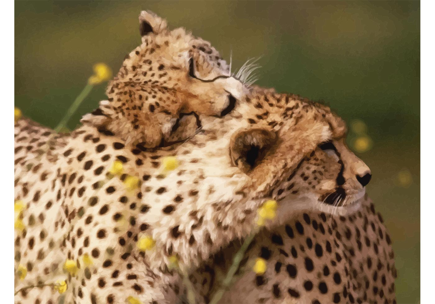 Cheetahs Download Free Vector Art Stock Graphics Amp Images
