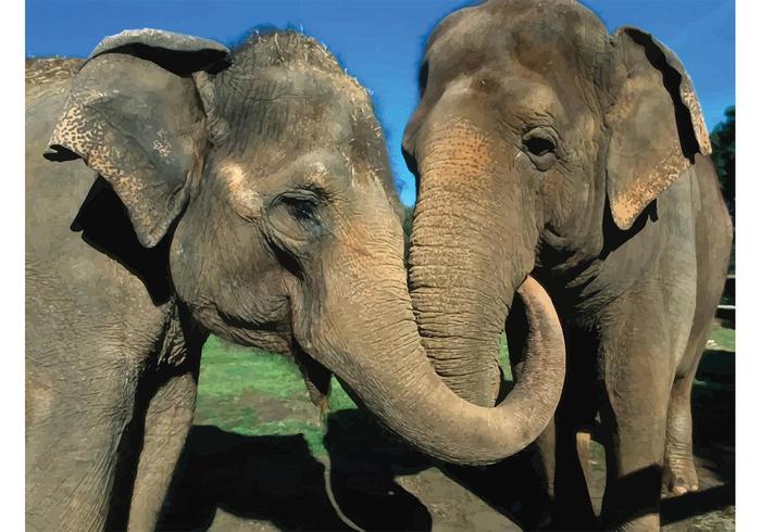 Elephants Couple