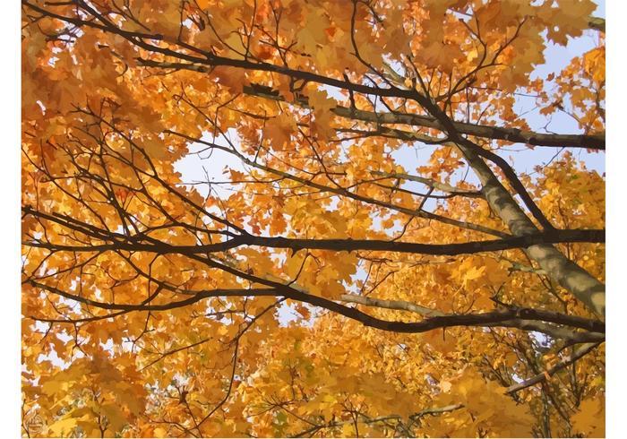 Autumn Trees Wallpaper