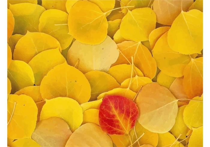 Fallen Leaves Close-Up