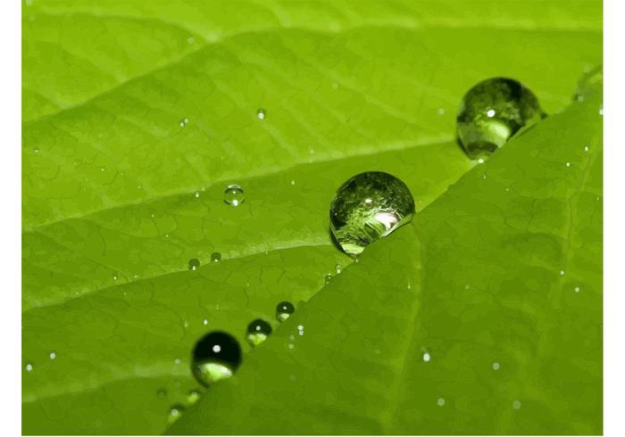 Nature Dew Drops