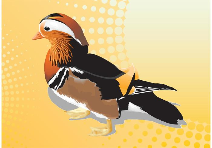 Mandarin Duck Vector