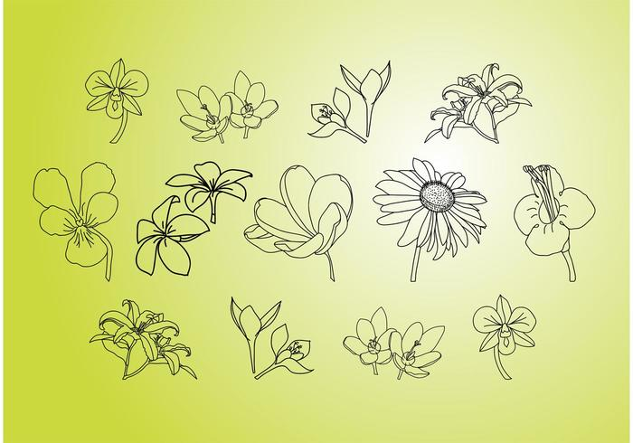 Vector Flower Illustrations