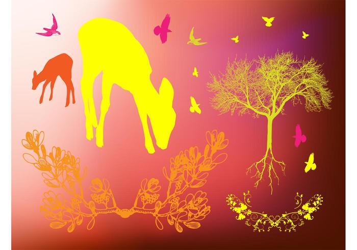 Imagens da floresta