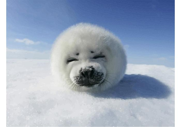 Funny Harp Seal