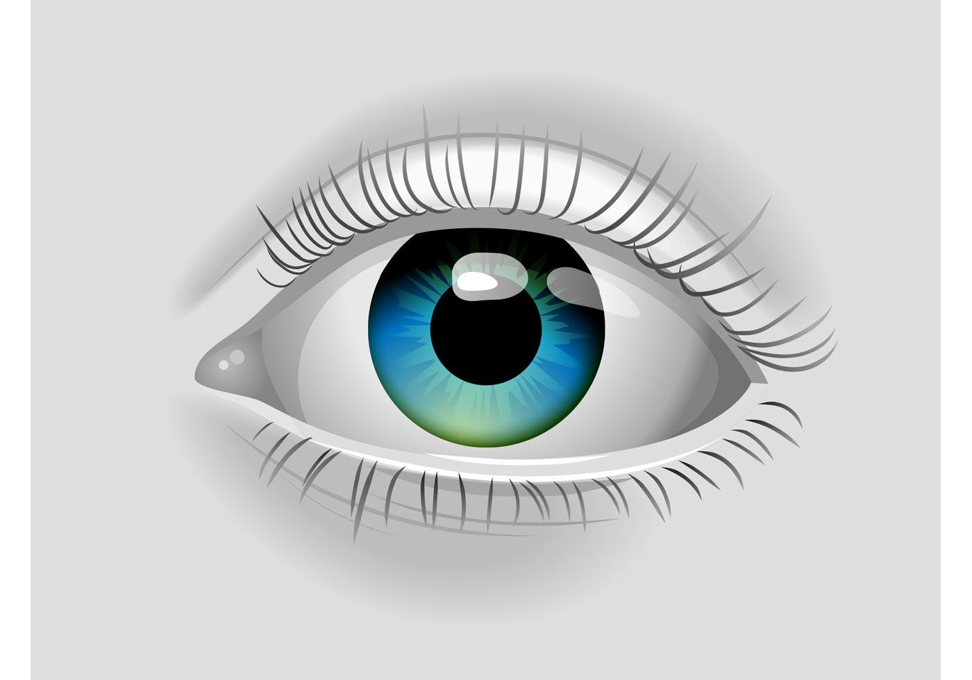 Realistic Vector Eye - Download Free Vector Art, Stock ...