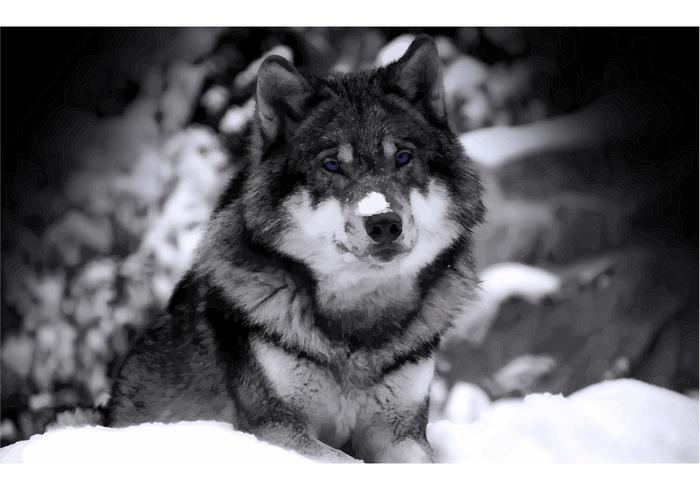 Wolf Vector Wallpaper
