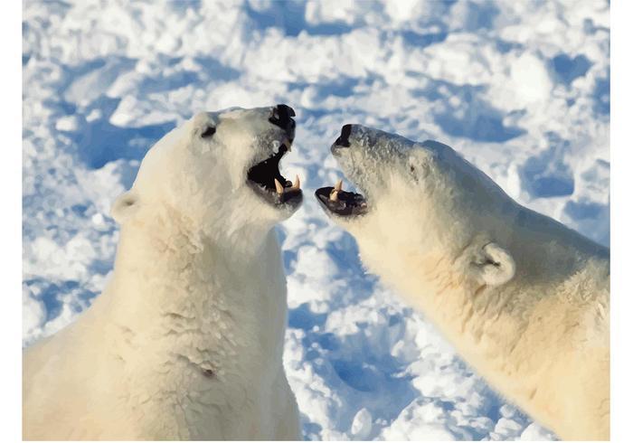 Polar Bears Image