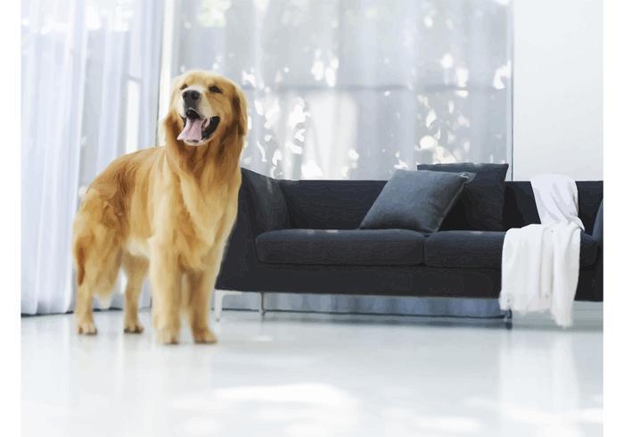 Luxury Dog