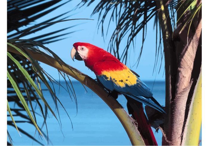 Macaw Image