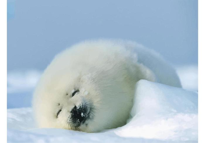 Seal Baby
