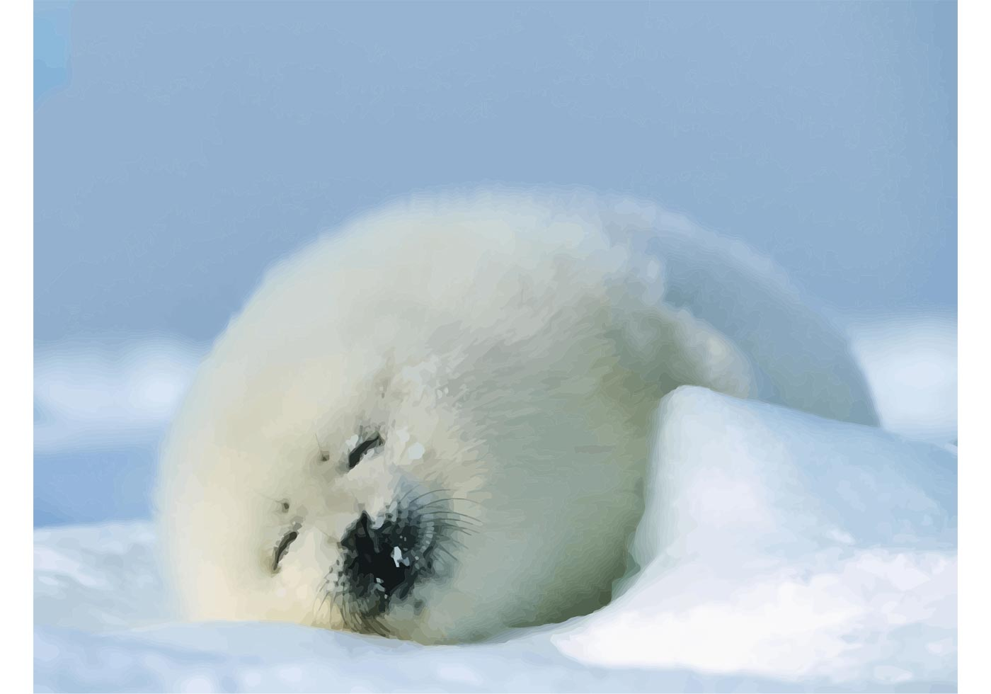 Seal Baby Download Free Vector Art Stock Graphics Amp Images