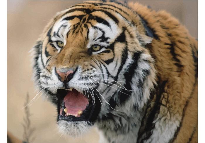 Siberian Tiger Image
