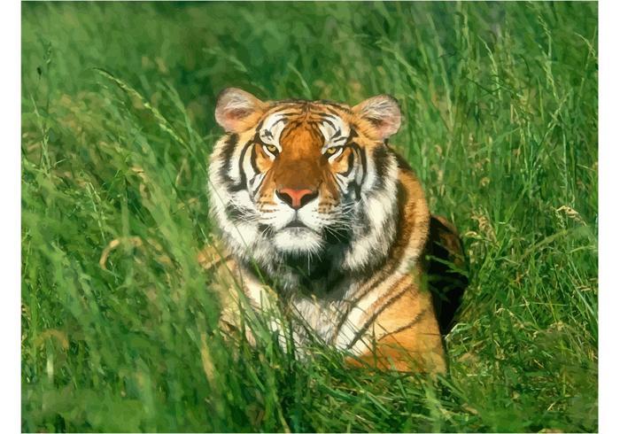 Relaxing Bengal Tiger Wallpaper